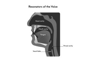 Illustration of the throat and mouth resonators of the voice