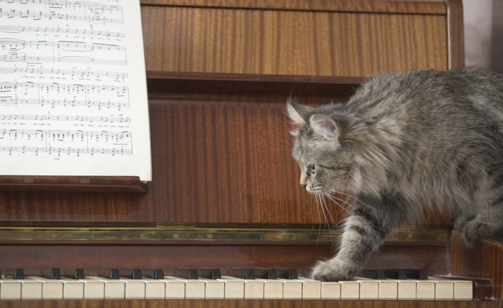 a cat walking across piano keys