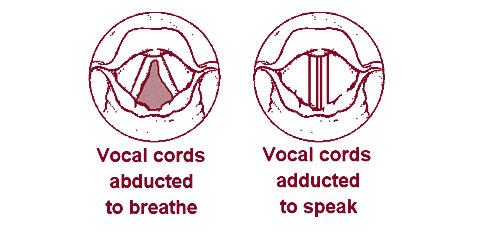 illustration of a larynx
