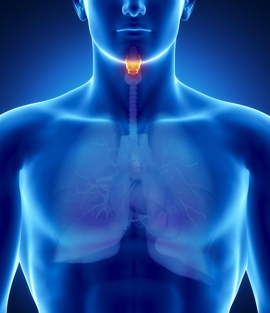 The Larynx-min