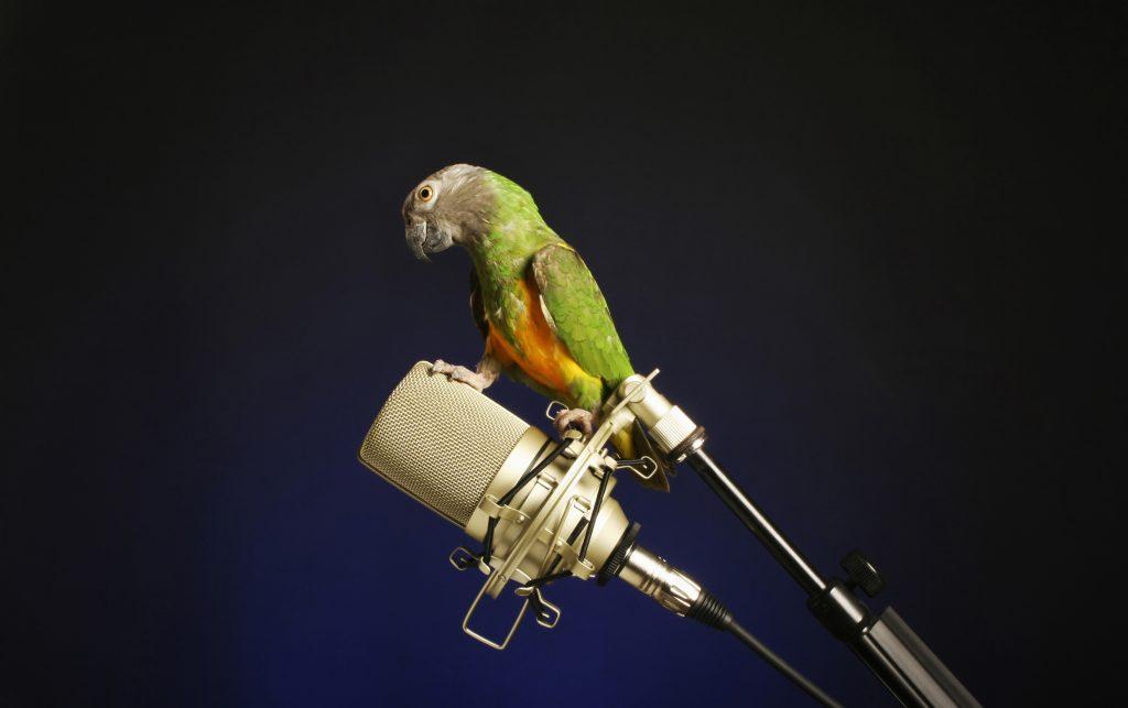 bird in microphone